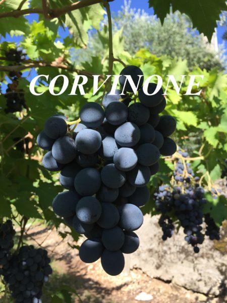 Uva Corvinone
