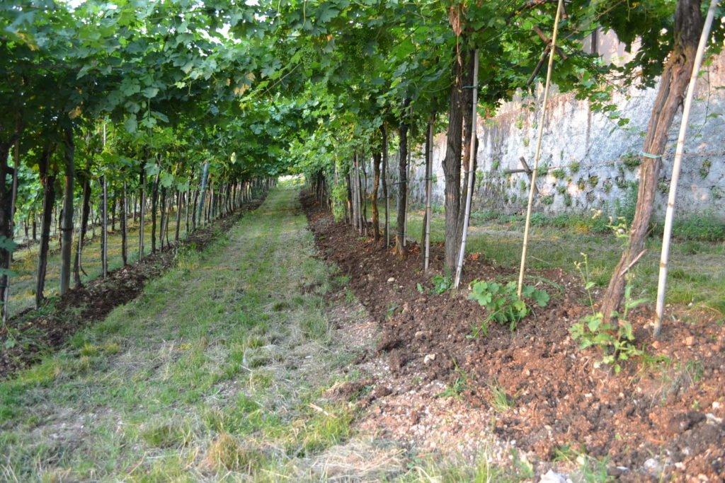 Environmentally friendly wines