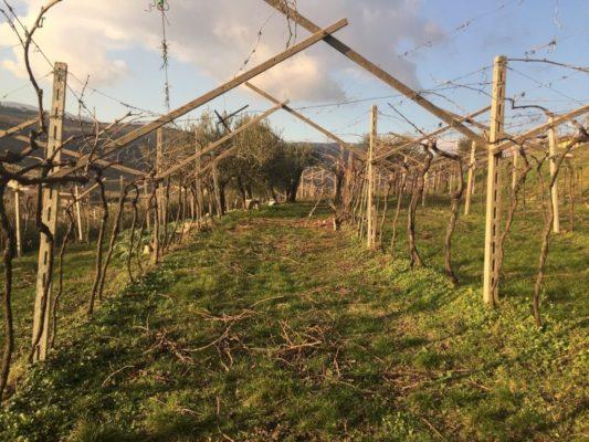 Invernarl work in the vineyard